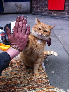 英國街頭藝人James Bowen和他的可愛搭檔橘貓Bob互相扶持的動人故事,讓他們在倫敦街頭小有名氣,國外一名喜歡紀錄Bob生活的網友最近也上傳一張照片,只見牠不只有陪在主人身邊幫忙當「小公關」,現在還會一些小把戲,伸出前腳跟主人「擊掌」。(街頭藝人與流浪貓,街頭藝貓Bob,A Street Cat Named Bob,貓,寵物)