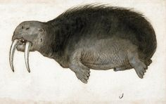 Mors (anonimowy rysunek, Niderlandy ok. 1560-1585, Amsterdam, Rijksmuseum)