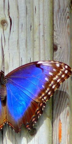 Love this composition, photographing half of a butterfly, or just cropping the original picture