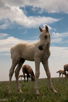 Wild Horse Looks like Cloud