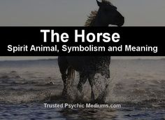 What does the horse spirit animal really mean? Find out the true meaning and symbolism of the horse in this special spirit animal analysis. Horse Spirit Animal, Animal Spirit Guides, Your Spirit Animal, Animal Meanings, Animal Symbolism, Native American Quotes, Native American History, American Indians, Power Animal