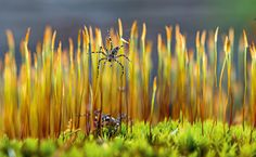 93 Days of spring: Day 67 | Spiders on moss