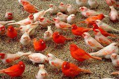 Birds00006.jpg (575×383)