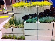 Cinderblock wall planters. What do you think Sis?  This would be great for herbs and small plantings.