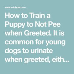 How to Train a Puppy to Not Pee when Greeted. It is common for young dogs to urinate when greeted, either because they are very excited (excitement urination) or because they are frightened, and wish to show submission (submission. Training Your Puppy, Dog Training Tips, Excited Puppy, Dog Minding, Dog Pee, Easiest Dogs To Train, Aggressive Dog, Best Dogs, Puppies