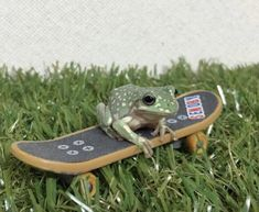 Cute Little Animals, Cute Funny Animals, Baby Animals, Sapo Frog, Skateboard, Lila Baby, Pet Frogs, Frog Pictures, Cute Reptiles