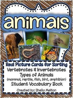 """I love using real pictures in science...and so do my students! This includes 30 animal picture cards - 15 vertebrate animals and 15 invertebrate animals. The kids love looking at the real-life animal pictures and sorting them! (2) activities are included with this unit...sorting """"Vertebrates"""" and """"Invertebrates"""" and sorting animals by Mammal, Reptile, Amphibian, Bird and Fish. Includes recording sheets. Perfect for your science center!"""