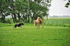 Isländer Bleikur - Party on mit dem Hund