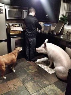 According to their website , Esther has influenced them to eat and live more humanely, and they encourage others to do the same. | 19 Photos Of Esther, The Most Wonderful Pig You Need To Meet
