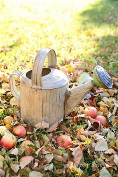 Apples in Autumn ~ Mary Wald's Place - A Rosy Note: Simple Splendor Milk Cans, Autumn Day, Happy Autumn, Autumn Garden, Water Garden, Water Plants, Farm Life, Garden Tools, Garden Art