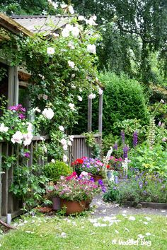 Vines, flower pots, porch, so welcoming!