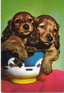 Two dachshund puppies sitting in a bowl! View from the Birdhouse: Dear Abby: Dachshund Postcards