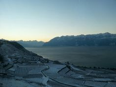 Les Lavaux, l'hiver, devant le lac Léman Switzerland, Vineyard, Coins, Nature, Pictures, Travel, Beautiful, Lake Geneva, Grape Vines