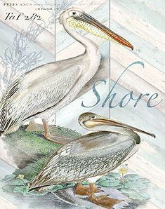 RB7776TS / Shore Birds I / Tre Sorelle Studios