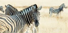 South African Adventure Sweepstakes - Children's Cancer Caring Center