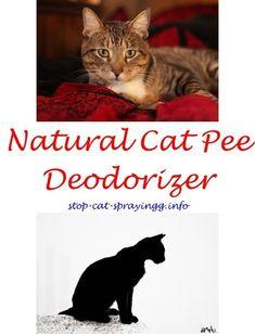Best 25 Pet Urine Remover Ideas On Pinterest Pet Urine