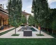 Image result for capital pear tree