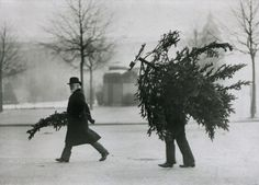 Hidden behind a Christmas tree