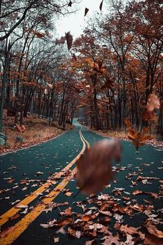 Image uploaded by Blank Space. Find images and videos about nature, travel and autumn on We Heart It - the app to get lost in what you love. Autumn Photography, Landscape Photography, Art Photography, Autumn Aesthetic Photography, Autumn Aesthetic Tumblr, Photography Wallpapers, Halloween Photography, Photography Hashtags, Red Aesthetic