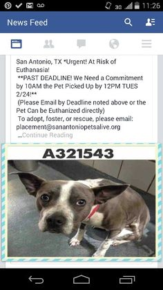 Pinning this handsome guy.  He's in San Antonio.  Needs out now.