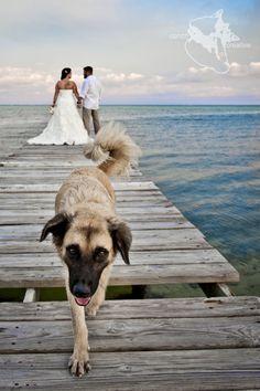 #BelizeWeddingPhotgrapher   #BelizeWeddingPhotography Belize Wedding Dog Wedding Crasher