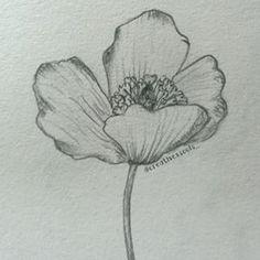 Easy to draw flowers how to draw poppy step 5 for details how to draw a poppy flower google search mightylinksfo