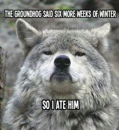 Funny pictures about Scumbag groundhog. Oh, and cool pics about Scumbag groundhog. Also, Scumbag groundhog. Funny Animal Pictures, Funny Images, Funny Animals, Cute Animals, Bing Images, Wild Animals, Funny Photos, Haha Funny, Funny Cute