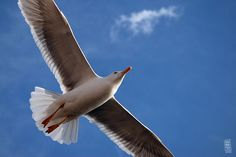 flying in beuautiful blue sky by musato