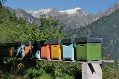 www.swissalpinehoney.com_Home of one of the beekeepers I work with_Ticino_Southern Swiss Alps Honey Brand, Take Me Over, Swiss Alps, Bee Keeping, Southern, Lovers, World, Alps Switzerland, The World