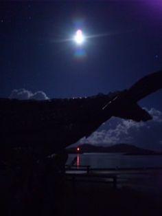 月明かりと鯨@座間味港