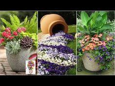 Amazing ideas for garden decorations Thorny Bushes, Rose Bush, Bloom, Garden Decorations, Plants, Amazing Ideas, Youtube, Design, Gardening