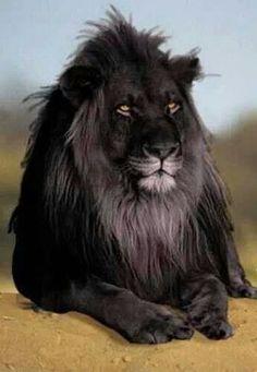Black Leon