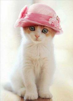 the cutest kitten with a pink hat #cutecats #cats #kitten #animals #cuteanimals