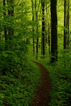 Laurel Highlands Trail. Ohiopyle State Park, Pennsylvania. (May 12, 2013)