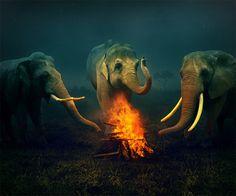 Elefantes y fuego