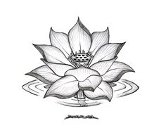 lotus flower - Google Search