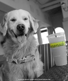 National Lemonade Day: black and white Sunday photo - If Life Gives You Lemons, You Should Make Lemonade