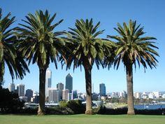 Kings Park, Perth, Australia - 2007 (Pop's favourite place)