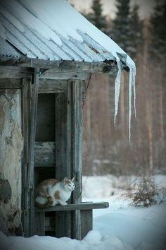ice sickles...