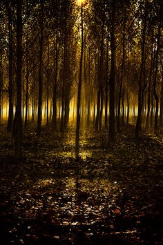 Lights in the woods, by Andy 58.