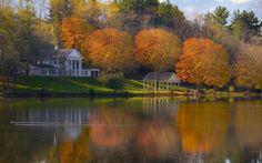 pato, água, árvores, jardim, móveis de jardim, casas, rio, calmo