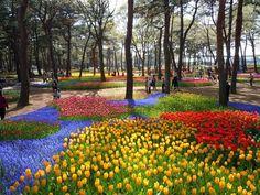 Hitachi Seaside Park, Ibaraki, Japan