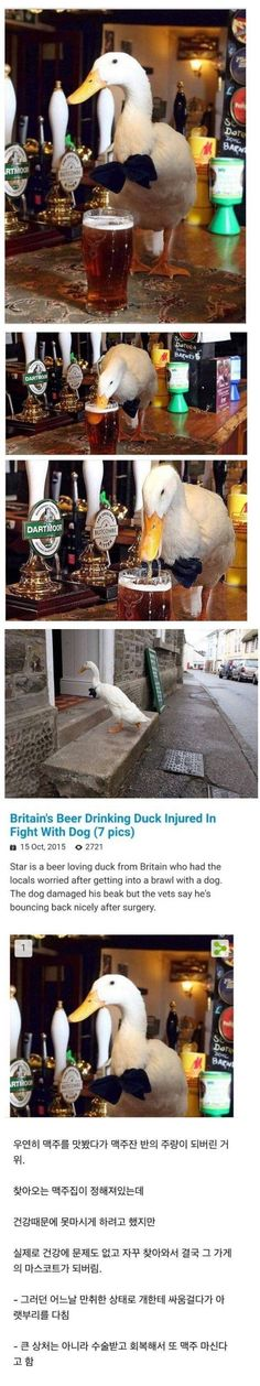 Just For Fun, The Locals, Things That Bounce, Britain, Soda, Bird, Humor, Memes, Funny