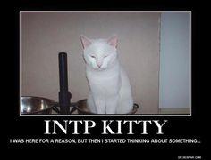 INTP Kitty
