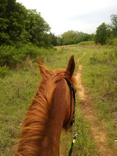 Happy horse trails, view from the back of a horse.