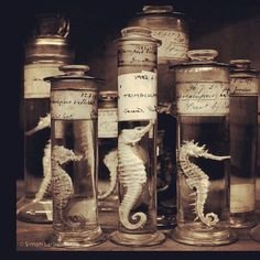 Macabre - Cabinet of Curiosities. interested in the classification of animals also. May be good reference for illustrations/installation setup. May inspire digital print. Curiosity Cabinet, Curiosity Shop, Cabinet Of Curiosities, Natural Curiosities, Spiritus, Photocollage, Weird And Wonderful, Oeuvre D'art, Natural History