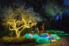 Garden Of Lights, Treasure Coast, Botanical Gardens, Holiday, Vacations, Holidays, Vacation, Annual Leave