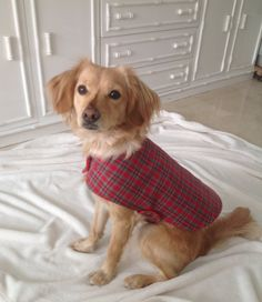 Chaqueta perro reversible en tartán rojo chaleco por MuckaPets
