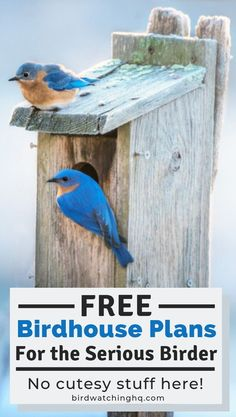 Lots of different ideas to attract flocks of species o… FREE DIY birdhouse plans. Lots of different ideas to attract flocks. Bluebird House Plans, Bird House Plans Free, Bird House Kits, Blue Bird House, Finch Bird House, Cardinal Bird House, Homemade Bird Houses, Bird Houses Diy, Building Bird Houses