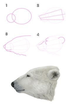 How to Draw Praying Hands - Really Easy Drawing Tutorial Bear Head, Bear Face, Drawing Skills, Drawing Techniques, Animal Sketches, Animal Drawings, Polar Bear Drawing, Bear Illustration, Tier Fotos